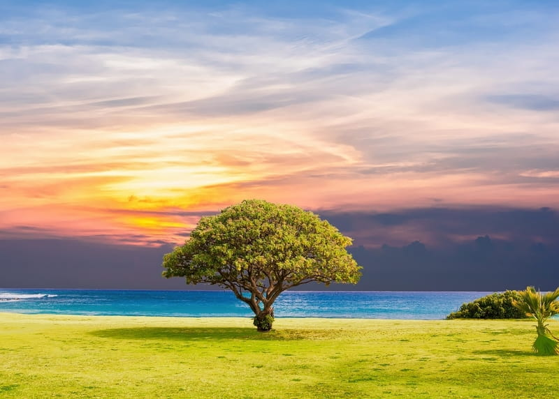 Adán y Eva - Historia de la Biblia