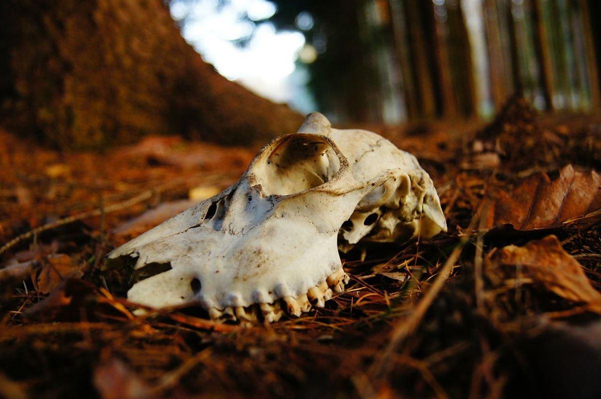 El valle de los huesos secos – Historia de la Biblia
