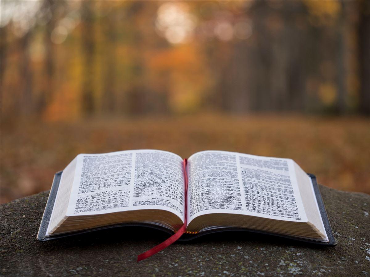 25 citas bíblicas que le darán a tu vida un nuevo significado