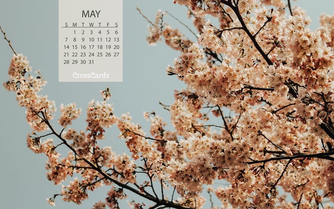 May 2017 - Blooms mobile phone wallpaper