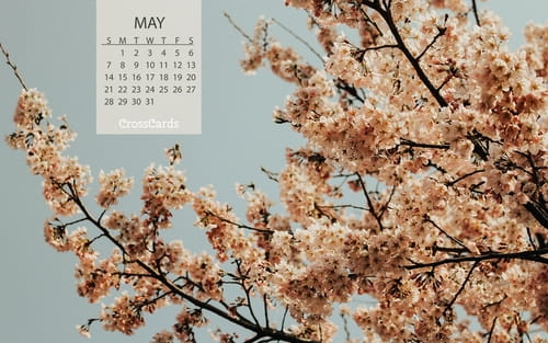 May 2017 - Blooms mobile phone wallpaper