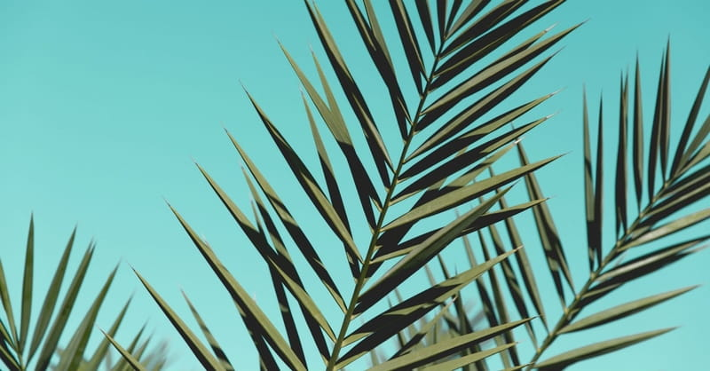 5 Powerful Ways Palm Sunday Reminds Us Jesus is the King of Kings