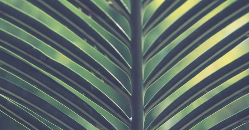 The Meaning Of Hosanna Powerful Name Of Jesus From The Bible