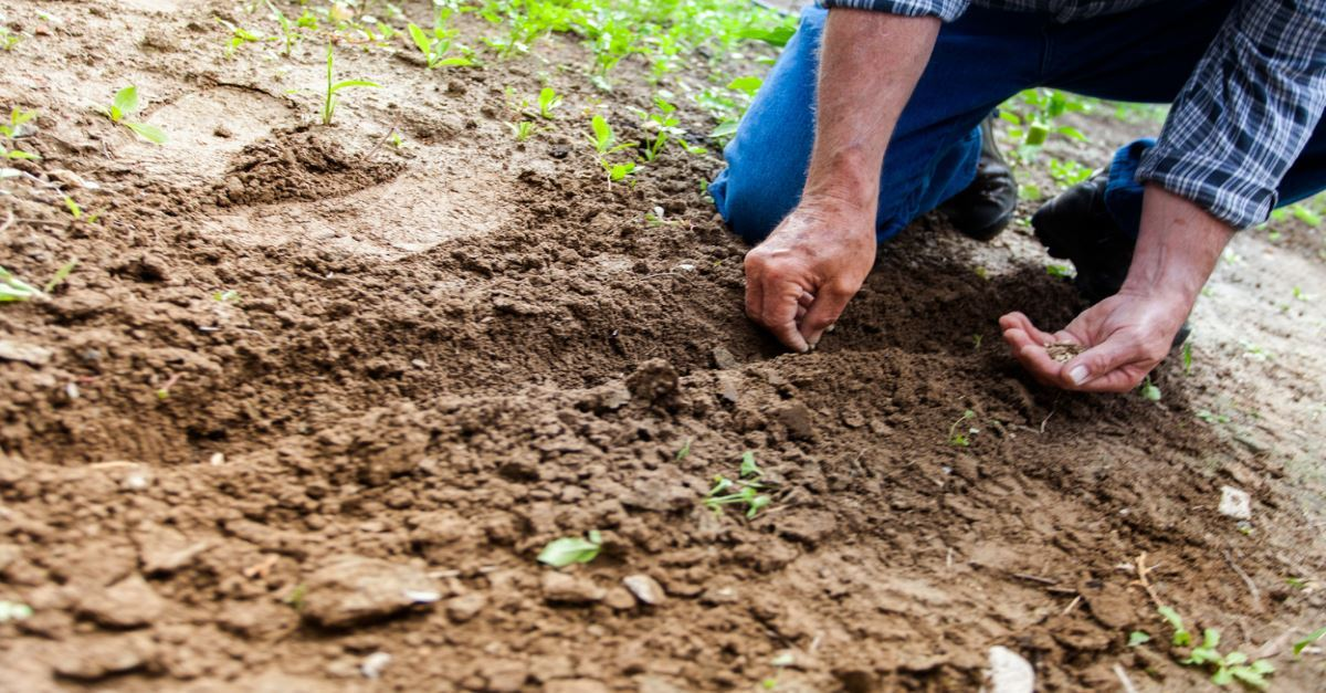 Top Bible Verses About Sowing Seeds Reap What You Sow In Scripture