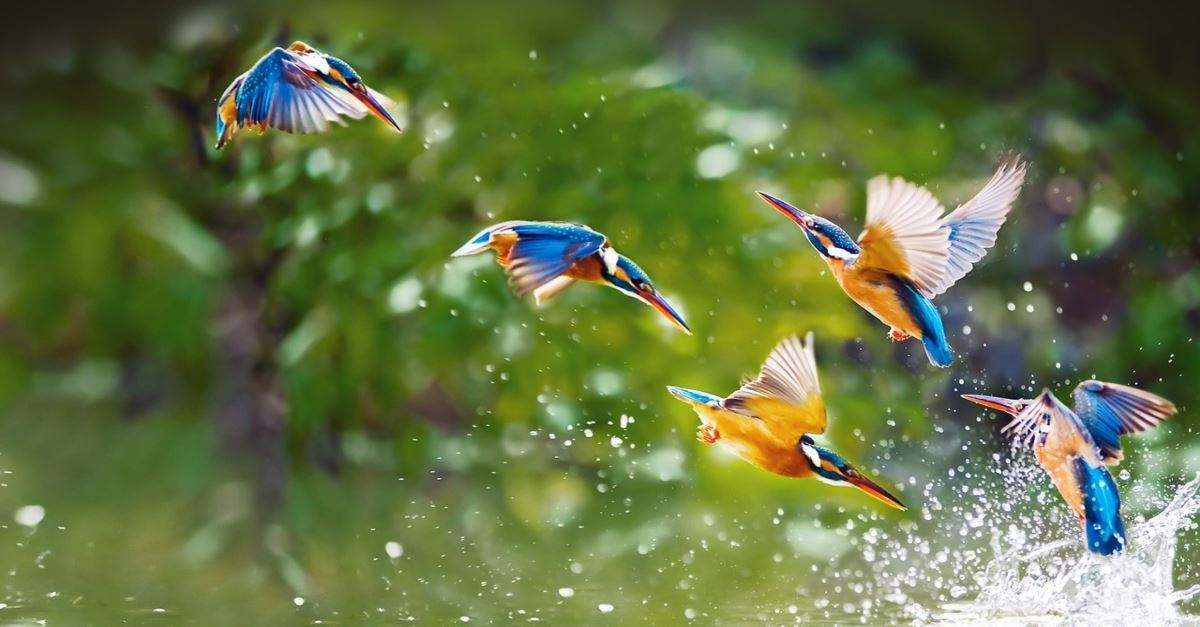 20 Bible Verses About Birds Scripture Quotes And Summary