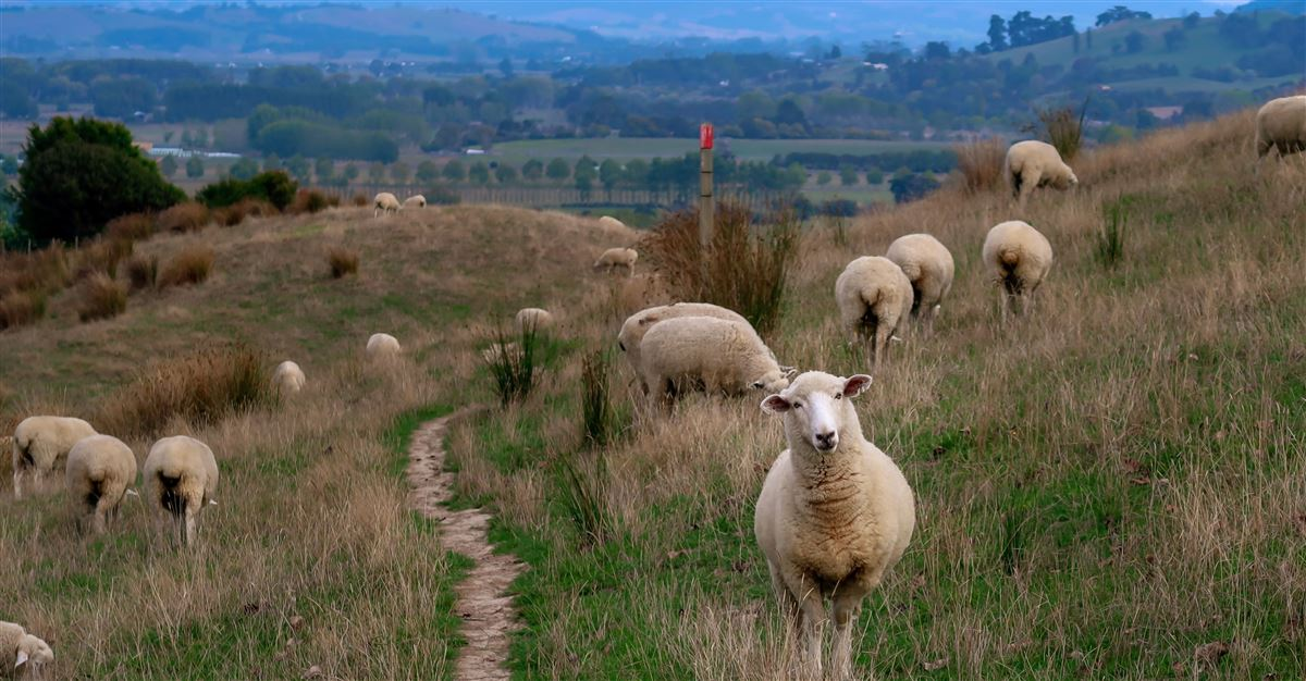 Psalm 23 - Finding Our Good Shepherd's Peace & Promises in the Midst of Darkness