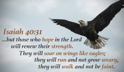 Isaiah 40:31 - but those who hope in the LORD will renew their...