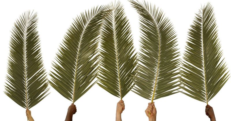 What Really Happened on Palm Sunday?