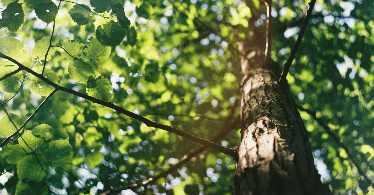 What Is the Significance of Trees in the Bible? Why Did