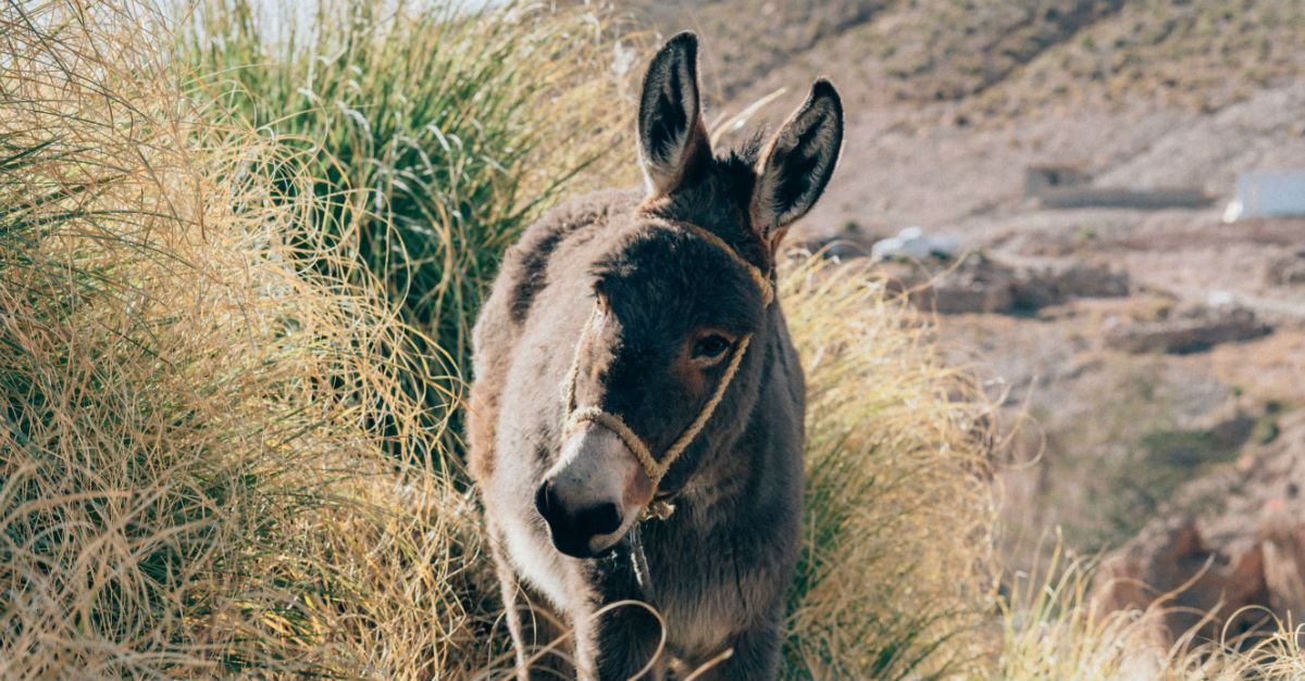 Who Were Balaam and His Talking Donkey in the Bible?
