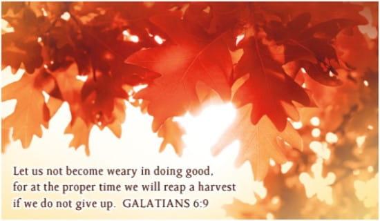 Galatians 6:9 ecard, online card
