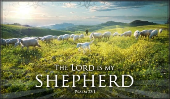 Shepherd ecard, online card