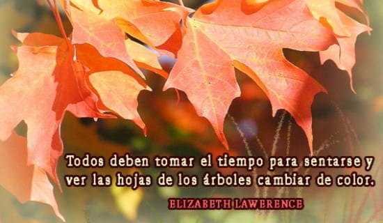 Ver las hojas de los árboles cambiar de color... ecard, online card