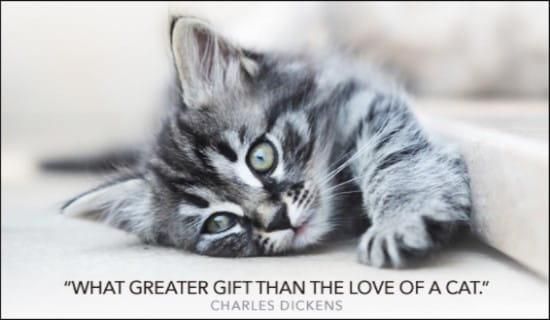 Love of a Cat ecard, online card