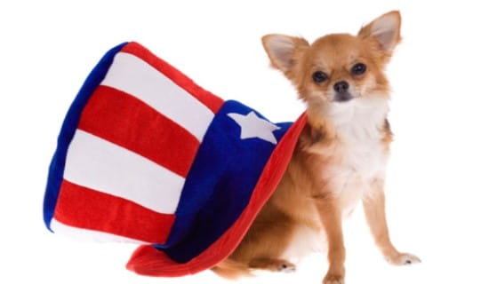 Fourth of July Dog ecard, online card