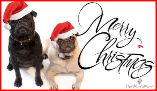 Merry Christmas, Christmas Dogs ecard, online card