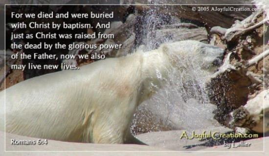 Baptism - Romans 6:4 ecard, online card