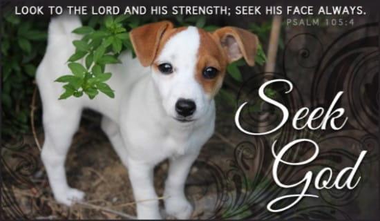 Seek God ecard, online card