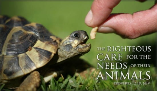 Care for Animals ecard, online card