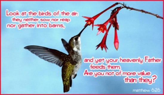 Birds Of The Air ecard, online card