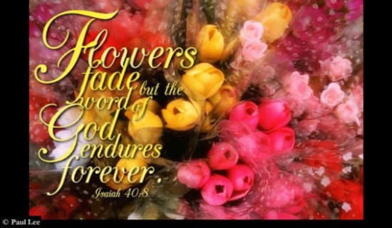 Flowers Fade ecard, online card