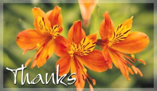 Orange Flowers ecard, online card