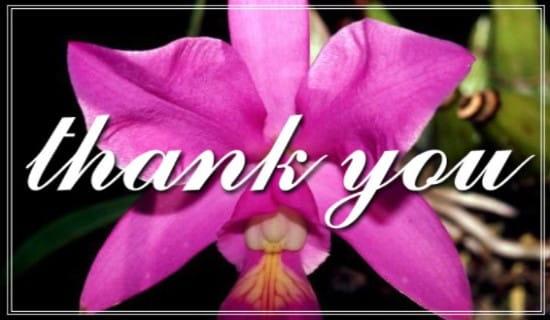 Pink Flower ecard, online card