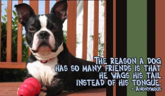 Dog's Best Friend ecard, online card