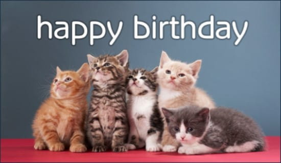 Birthday Kittens Ecard Online Card