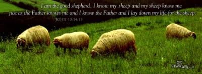 Shepherd mobile phone wallpaper