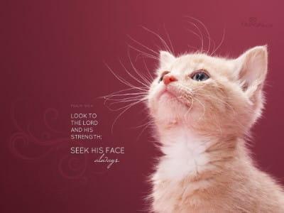 Seek His Face mobile phone wallpaper