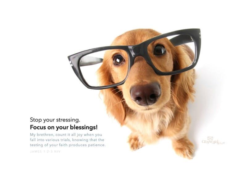 Focus On Blessings mobile phone wallpaper