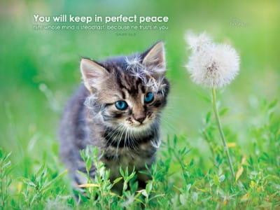 Perfect Peace mobile phone wallpaper