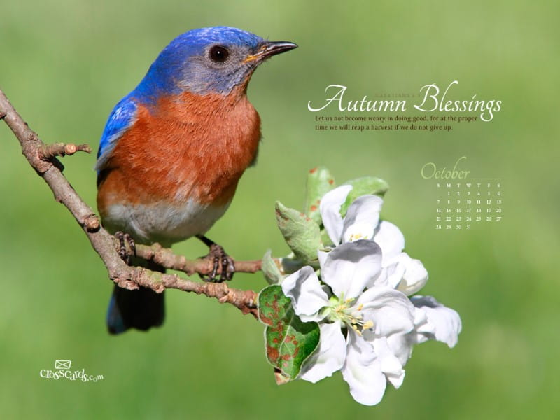 Oct 2012 Bird mobile phone wallpaper