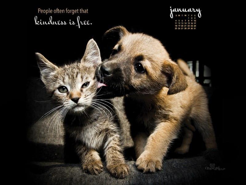 January 2015 - Kindness mobile phone wallpaper