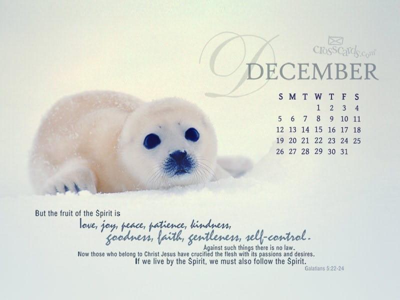 December 2010 - Seal mobile phone wallpaper