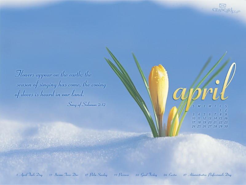 April 2011 - Flowers mobile phone wallpaper