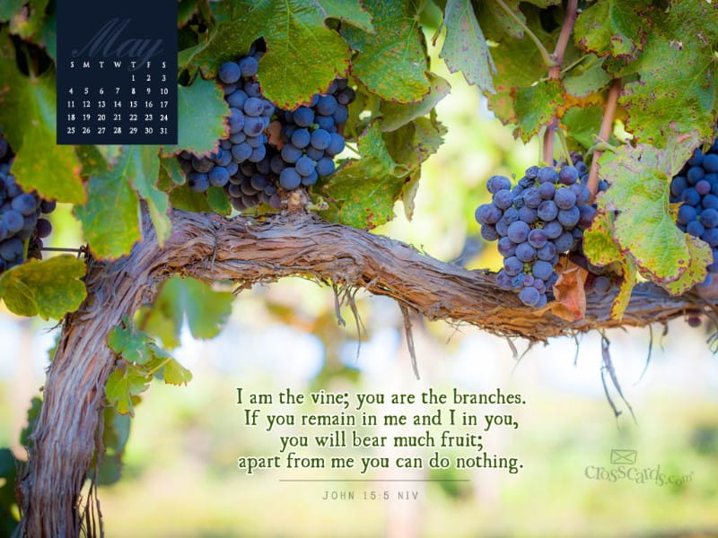 May 2014 - Vine and Branches mobile phone wallpaper
