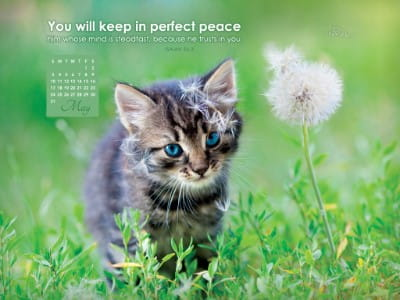 May 2015 - Perfect Peace mobile phone wallpaper