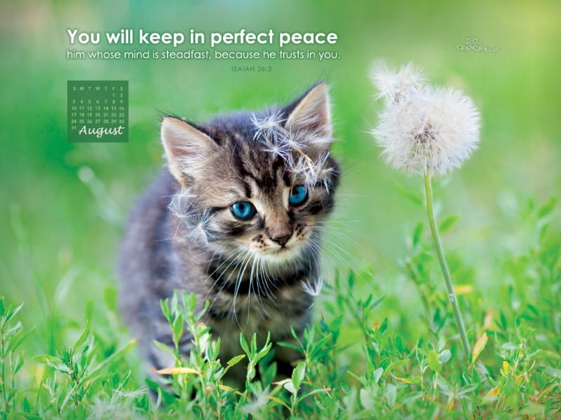 August 2014 - Perfect Peace mobile phone wallpaper