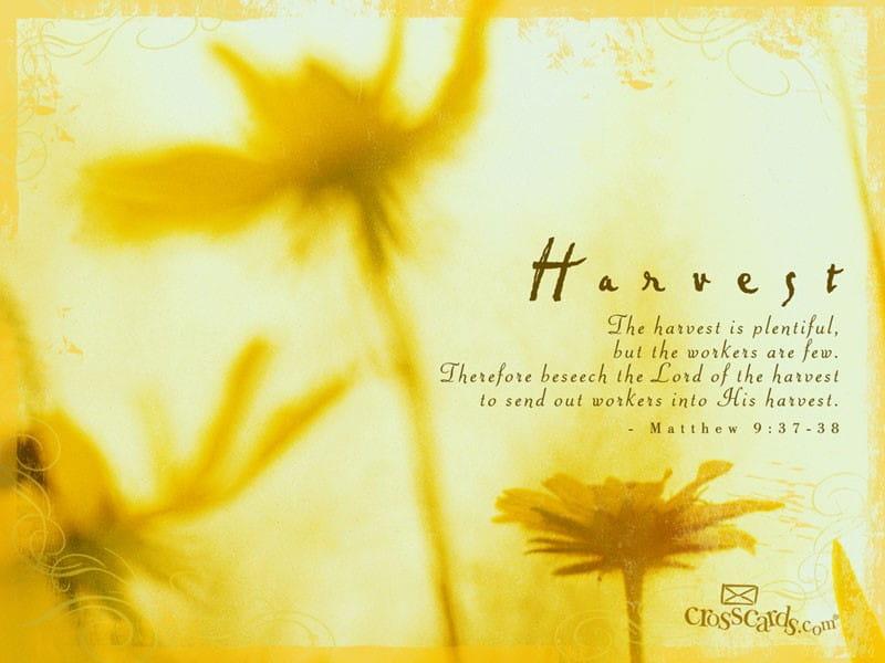 Harvest mobile phone wallpaper