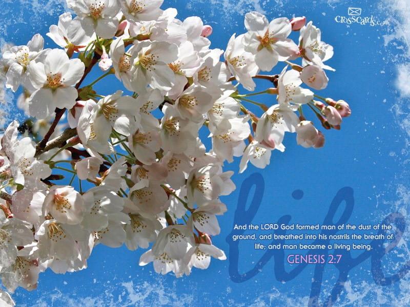 Life - Genesis 2:7 mobile phone wallpaper