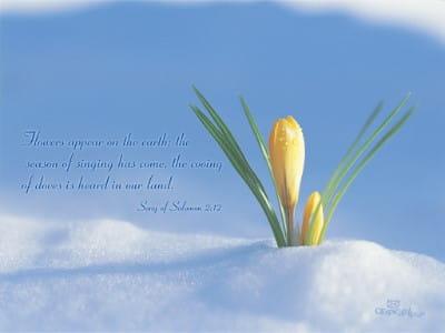 Song of Solomon 2:12 mobile phone wallpaper