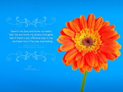 Psalm 138:23-24 NIV mobile phone wallpaper