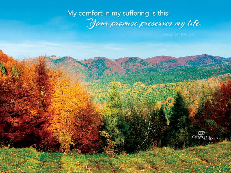Psalm 119:50 mobile phone wallpaper