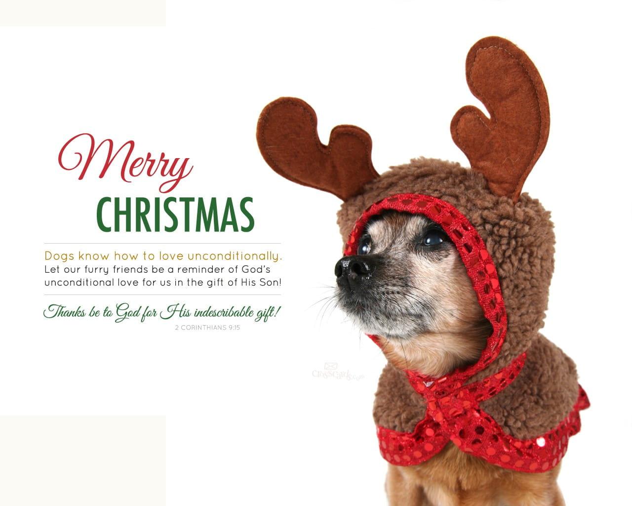 Good Wallpaper Love Merry Christmas - 24613-merry-christmas-dog-love-1280-x-1024  Trends_94837.jpg