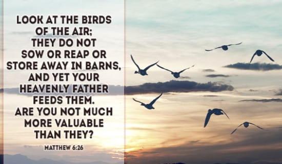 Matthew 6:26 ecard, online card