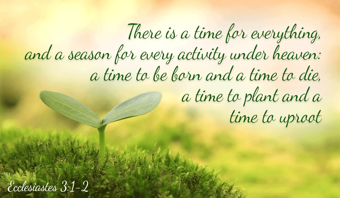 It's all in the timing - Ecclesiastes 3:1-2 ecard, online card