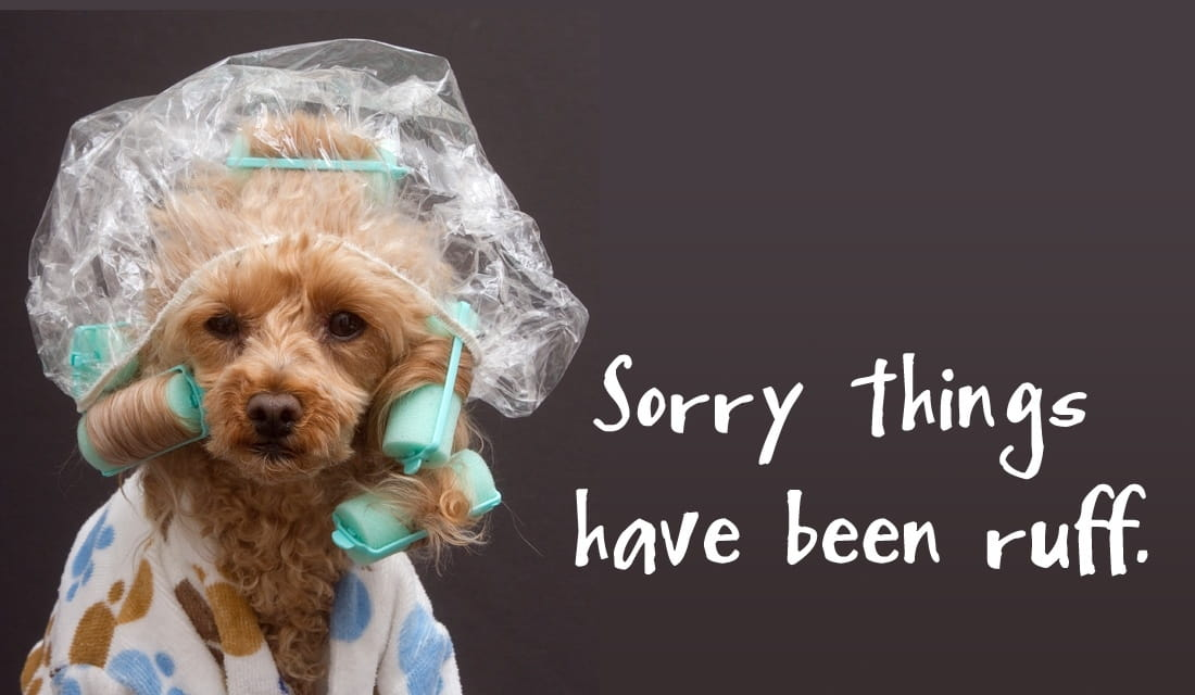 Sorry Things Are Ruff ecard, online card