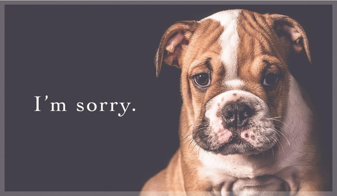 I'm Sorry ecard, online card